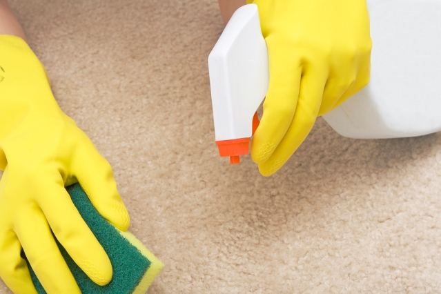 cleaning stain on a carpet with a sponge