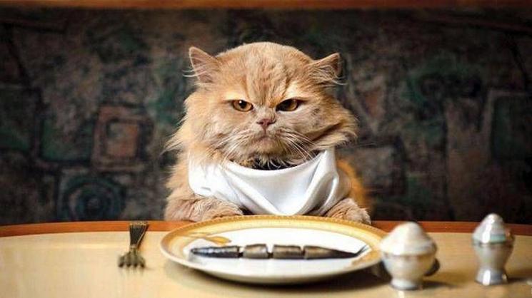 Корм для кошек своими руками рецепты 203