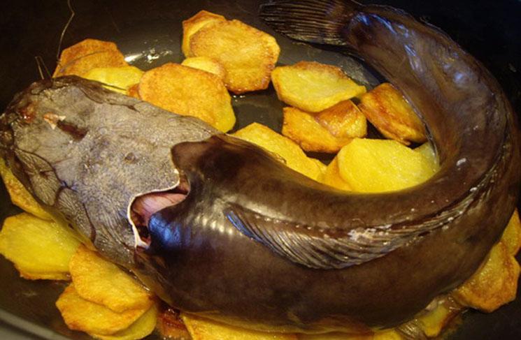 Приготовление сома с картошкой в духовке рецепт
